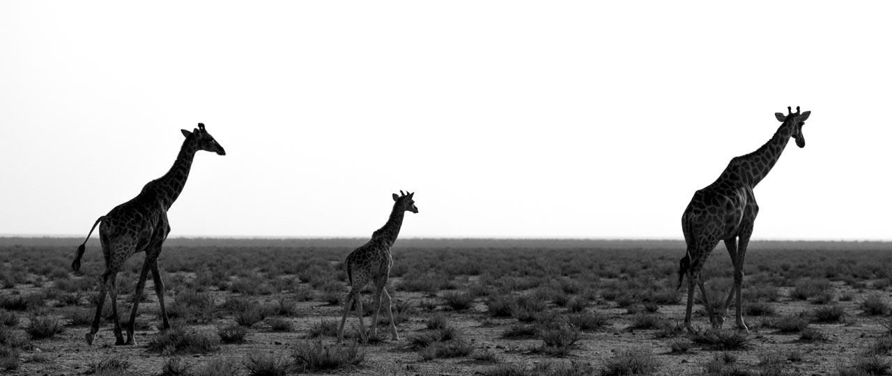 namibie_westhoff_img_10070